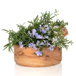 Rosemary scent stimulates mental abilities